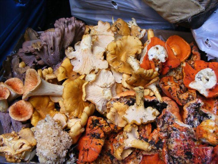 1000 ideas about edible mushrooms on pinterest fungi boletus edulis and edible wild mushrooms - Wild mushrooms business ideas ...