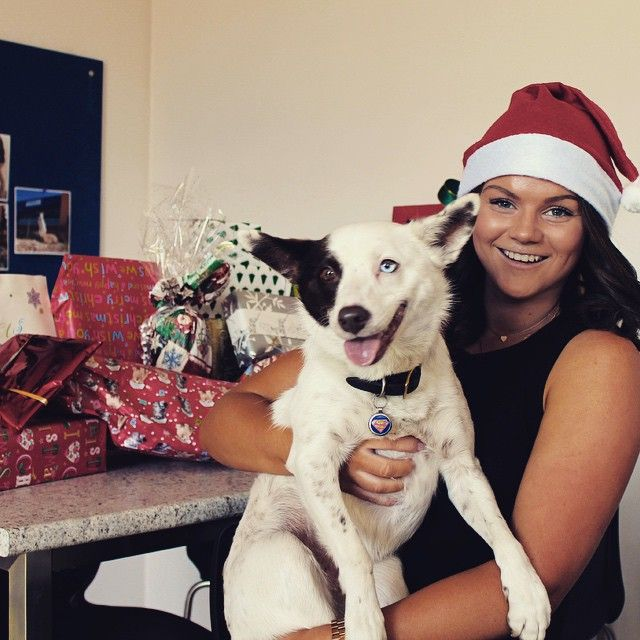 Sahara joined in on the fun at our recent Christmas party in Melbourne! #Jetpets #christmas #holidays #party #fun #dogs #rescuedogs