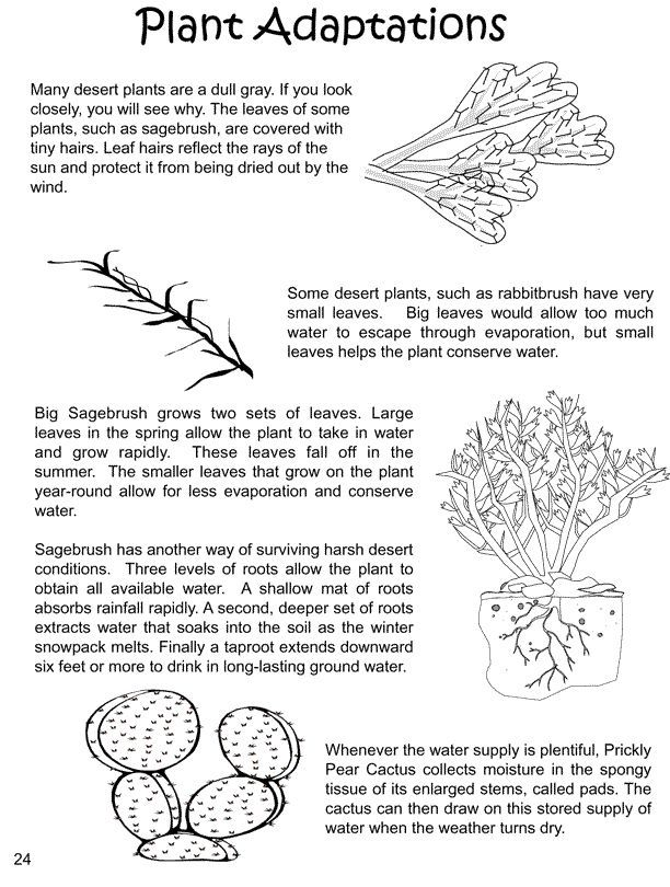 800 best biology images on Pinterest   Physical science, Biology ...