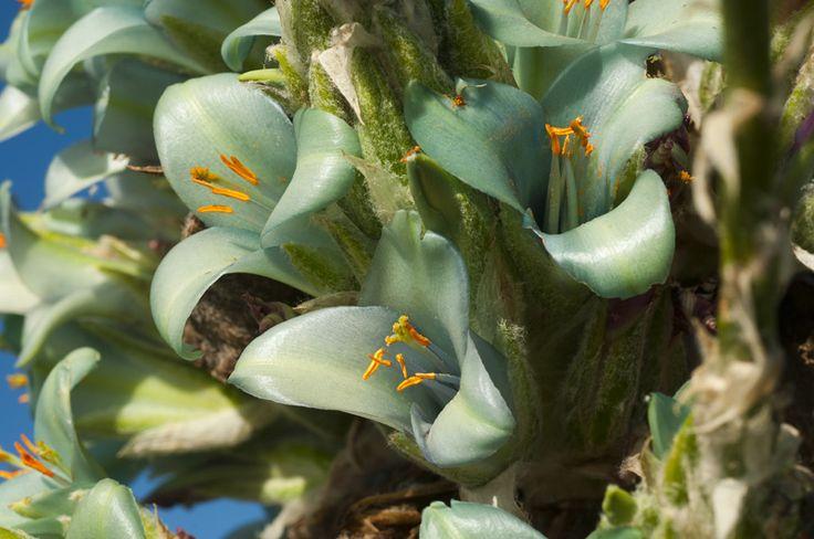 Flora nativa de Rocas del Mar