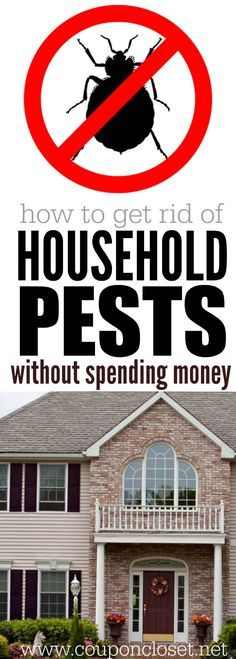 How to get rid of Household Pests - How to get rid of bugs