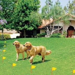 11 best invisible fence images on pinterest fences dog fence and invisible fence cost depends on the quality of the product invisible fence cost can be prepared perfectly if we know how much does invisible fence cost solutioingenieria Image collections