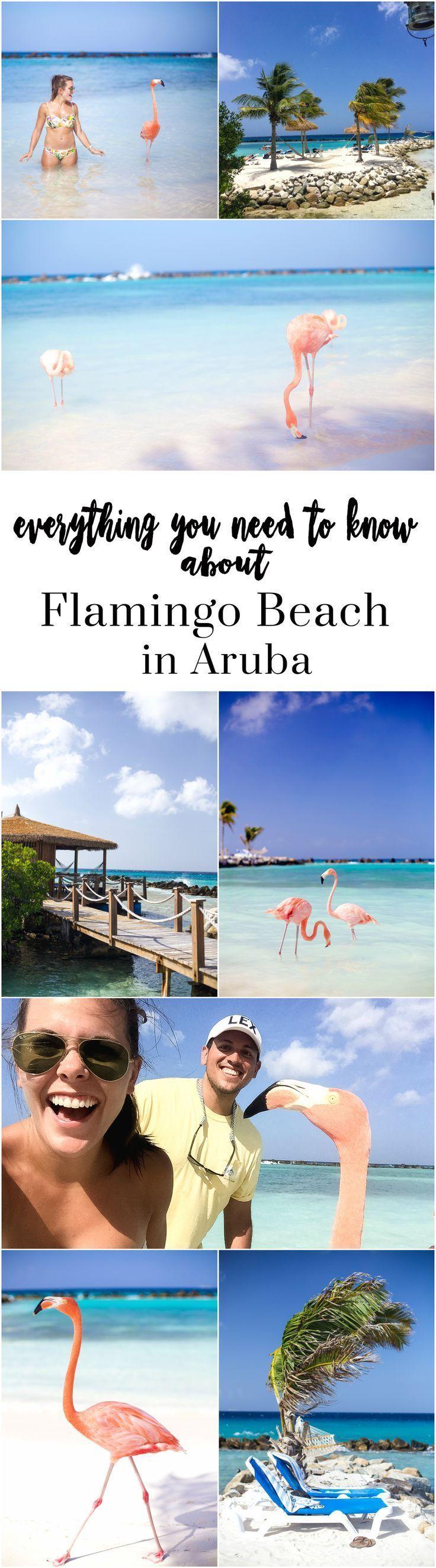 Aruba Travel Guide 76 best Aruba images