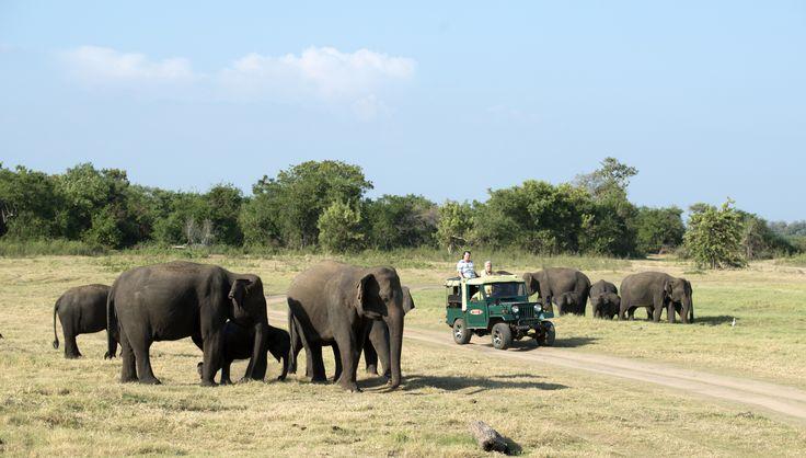 Minneriya Nationalpark. Nationalparken er omkring ca. 8.900 hektar og er hjemsted for et utal af pattedyr, 9 paddearter, 160 fuglearter, 25 krybdyrarter, 26 fiskearter og over 75 sommerfuglearter. Parken er især kendt for sit store antal af elefanter, og der er derudover mulighed for at se aber, hjorte, krokodiller samt de sjældne og truede leoparder og bjørne.