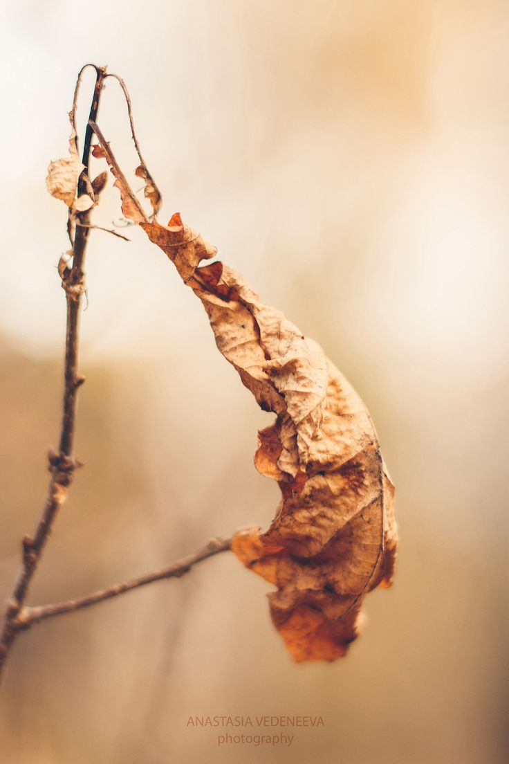 Last leaf by Anastasia Vedeneeva on 500px