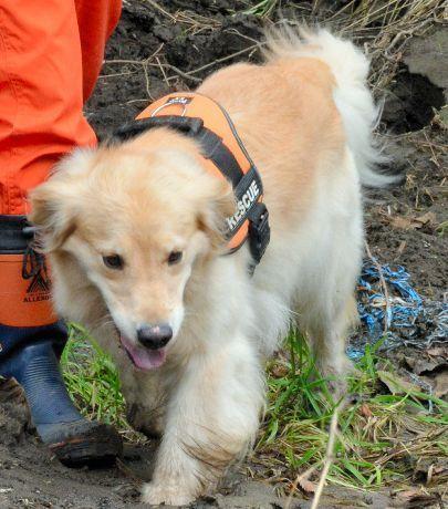 災害救助犬「ゆき」、台風被災地に出動 大震災を機に救助犬に