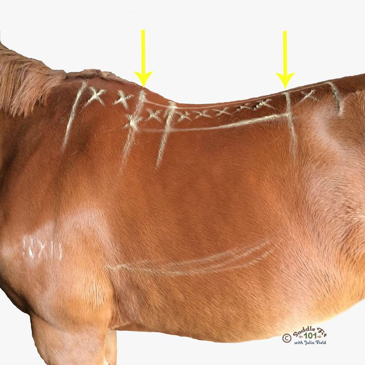When you saddle up your horse is your saddle in the right place and does it fit? Easy steps to assess your saddle.