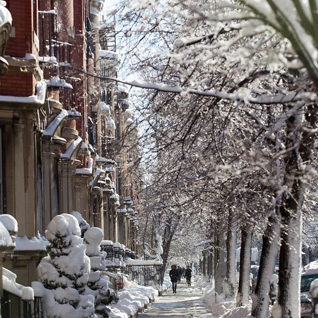 Daydreaming Of This Wintry Scene On Bay State Rd Wintry Scene Daydream