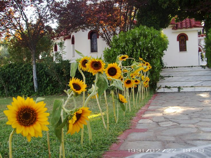 Moustakas flowers-Church wedding decor with sunflowers #weddingideas #summerweddings #sunflowers #churchdecor #naturaldecor
