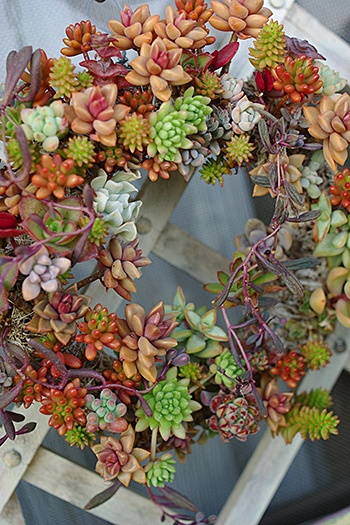 Love this living succulents wreath, so many colors.....they are so beautiful!!