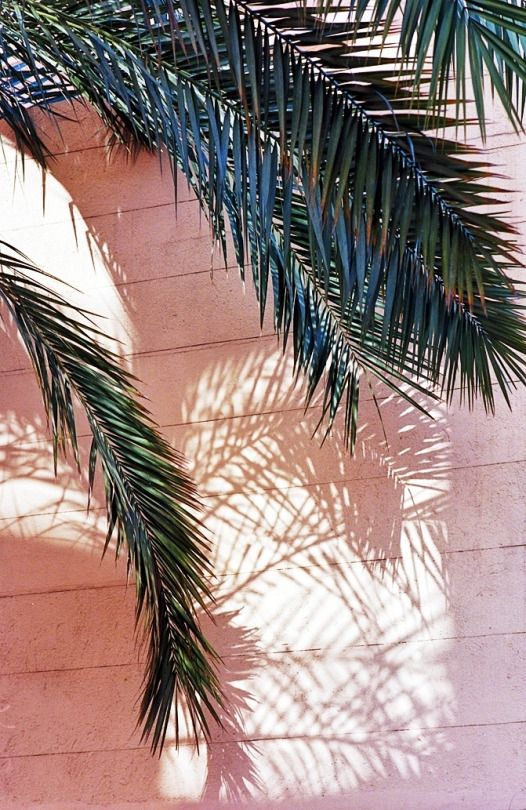 palms... pink and green... shadows