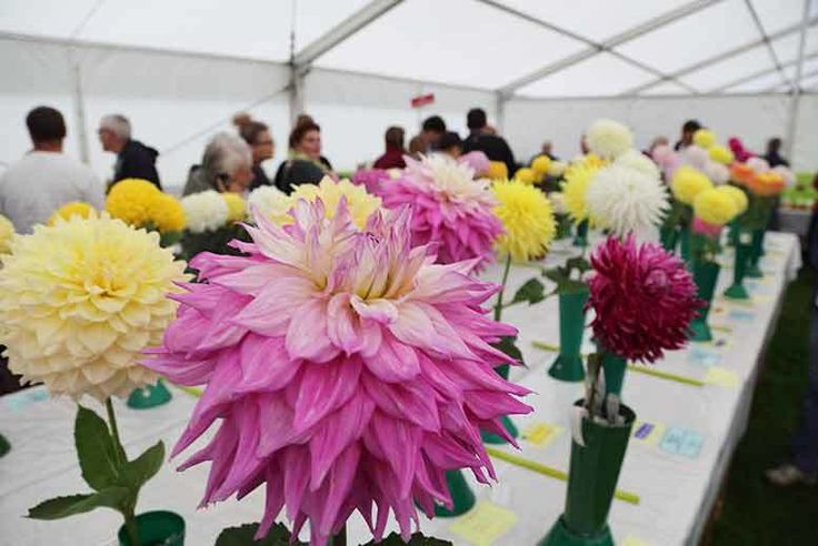 Cardiff RHS Flower Show Stay - April 6-8 deal in Accommodation Enjoy an overnight Cardiff stay at the Park Inn by Radisson Hotel.  Stay in a twin or double en-suite room with Wi-Fi and TV.  Includes a ticket to the brilliant RHS Cardiff Flower show.   Tuck in to a delicious full English breakfast in the morning.  Have a happy horticulture day and a cool Cardiff city centre night!  Valid for stays on 6th-8th Apr 2017 only. BUY NOW for just £49.00