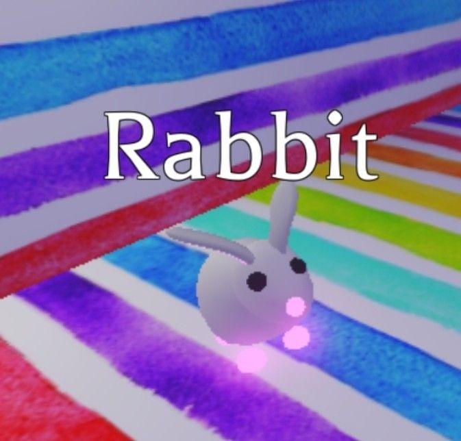 Neon Rabbit In 2020 Pet Adoption Adoption Pet News