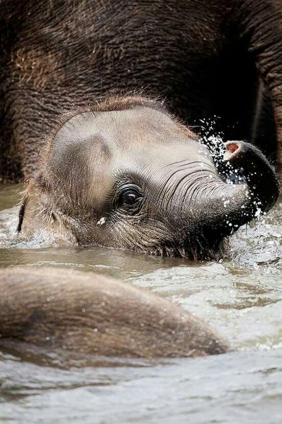 Baby elephant bath time!