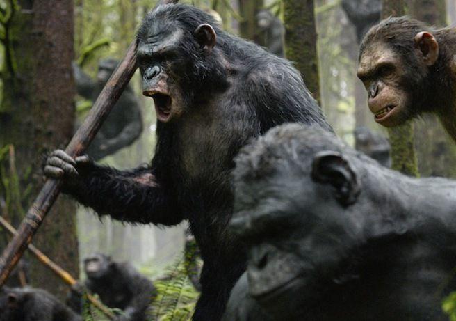 """Oleada de imágenes de """"El Amanecer del Planeta de los Simios"""" http://www.aullidos.com/noticia/20922/oleada-imagenes-amanecer-planeta-simios/"""