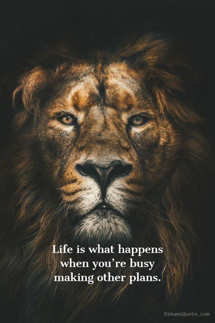 79 Inspirational Quotes That Will Change You Forever Lion Wallpaper Animal Wallpaper Lion Art
