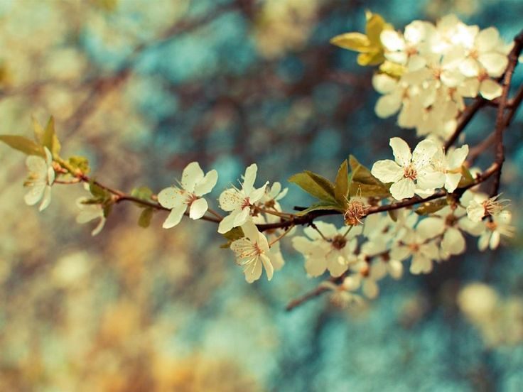 spring wallpaper hd 1920×1080