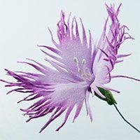 Лесные, луговые и полевые цветы из фоамирана