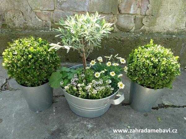 Mini English garden