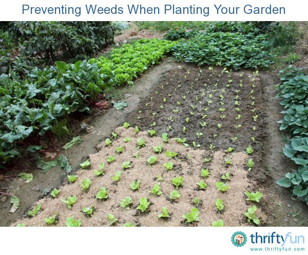 an overview of the ways to prevent weeds from growing The best way, though the hardest, is to pull the weeds by hand keep in mind that for this method to be effective, you should remove the whole plant with its roots.