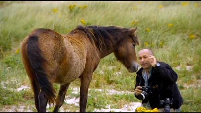 Roberto Dutesco: The Wild Horses of Sable Island - Los Angeles News | FOX 11 LA KTTV