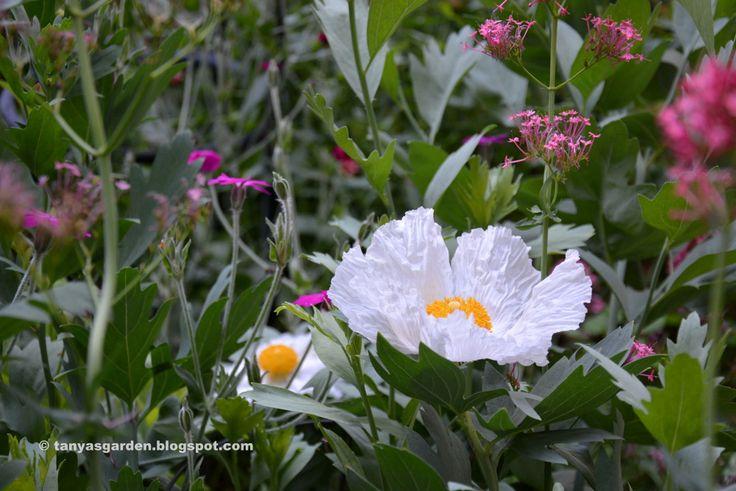 MySecretGarden: My July Garden in Pictures (Washington State, zone 8)