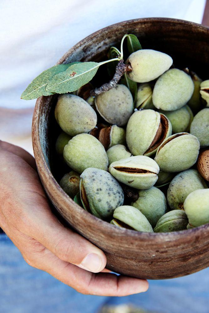 Almonds | We You They Ate - Mikkel Karstad
