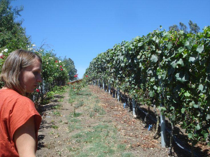 Alejandra Gutiérrez of Loma Larga giving a tour of their beautiful vineyard