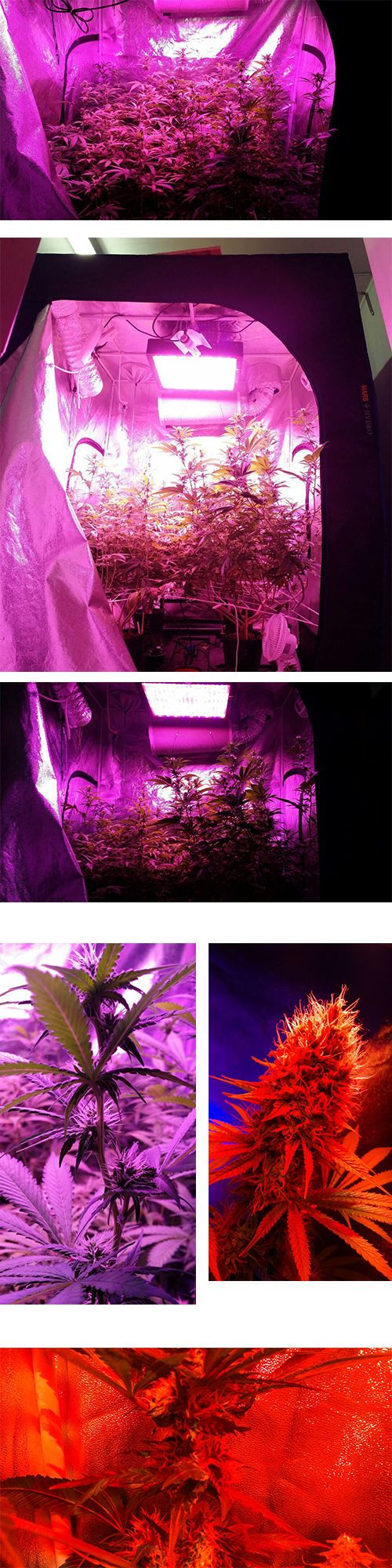 7 best mars hydro marsii led grow light series images on pinterest cannabis growing with mars led grow light indoor plant parisarafo Gallery