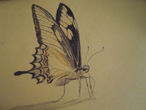 mariposa hecha con carboncillo negro y lapiz amarillo - j... - Fotolog