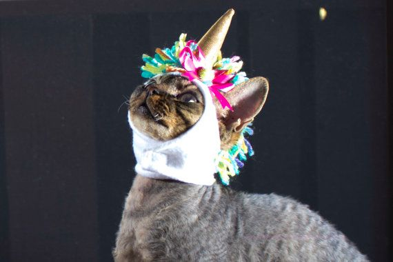 Costumes for Pets Halloween Unicorn cat Hat Unicorn horn Hat Gifts for Pets…