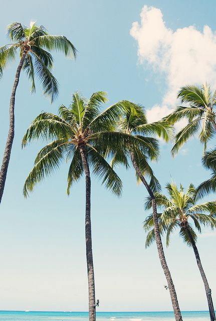 salty days || coconut trees || bright skies