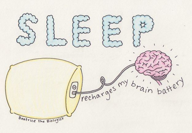Sleep is critical if you want your brain to, you know, function.
