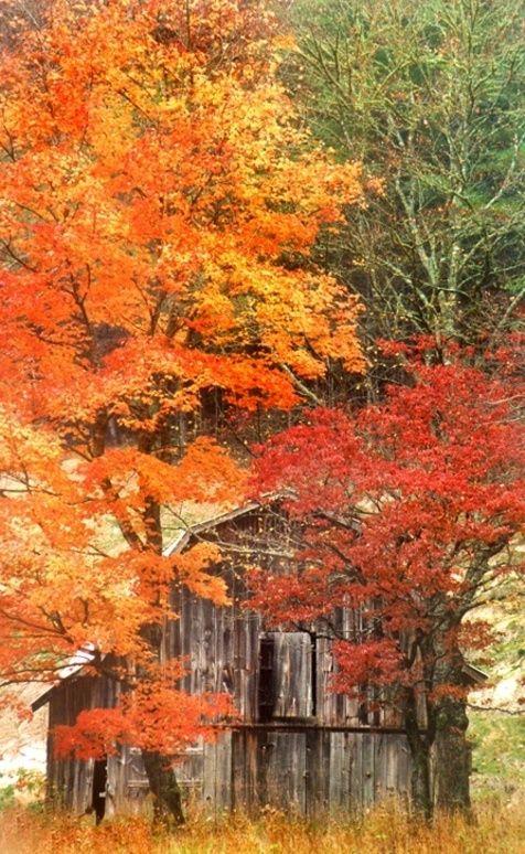 Paisaje rojizo de otoño