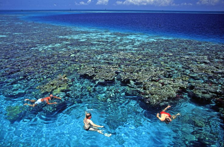 Cancun also boasts terrific access to the second-largest barrier reef system in the world, also known as the Mesoamerican Barrier Reef (or Belize Barrier Reef).  #CancunPlaces #tourisim #traveltomexico