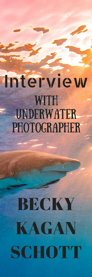 Read what it takes to be an underwater photographer