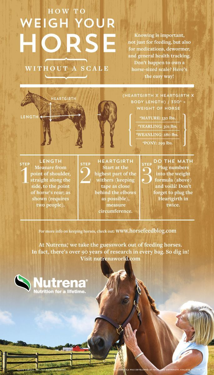 How Horses Learn And Think - Equiworld - Equestrian ...