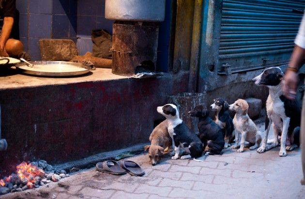 psy na ulicy w Waranasi czekające na odpadki