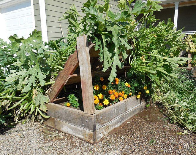 I have 4 x 4 raised beds in my veggie garden, and no matter what I do, my squash plants always outgrow them and run all over the gravel paths in between the bed�