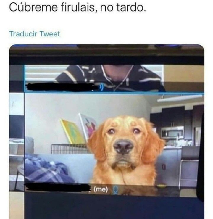Jajaja Que Lindo Perro En 2020 Memes Divertidos Memes Comicos Memes Graciosos