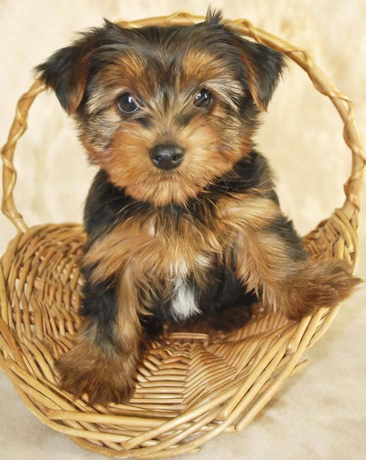 Good Puppies Bow Adorable Dog - 280bf7b0bbcd2c39dd863153bd03330d--cute-puppy-names-cute-puppy-pictures  Image_479112  .jpg