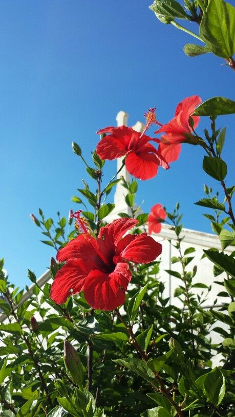 Ustica - Colours: red