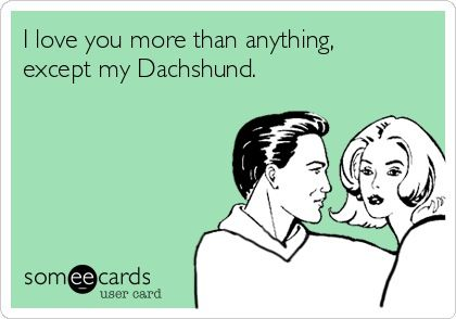 I love you more than anything, except my Dachshund | pretty much!