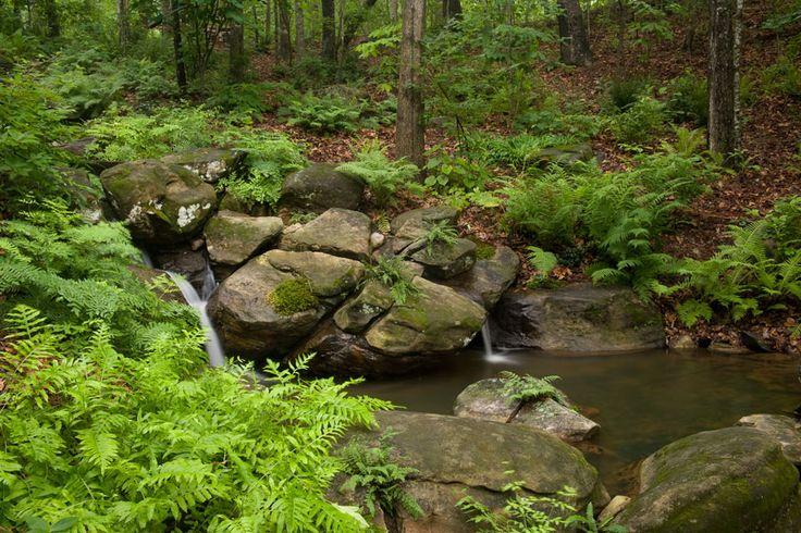 Machado Landscaping Woodland Ca : Garden woodland landscape design forward