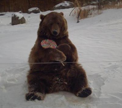 Brutus the Bear 10th Birthday