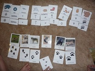 Animal Tracks Unit Study - Match the tracks with the animals that made them...  http://www.squidoo.com/animal_tracks