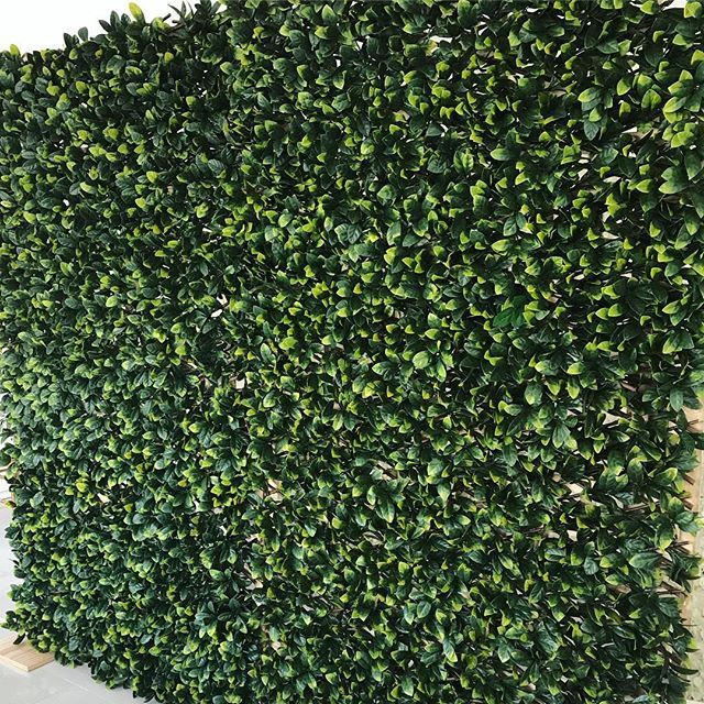 Very Popular Greenery Wall Hire for your next event $100