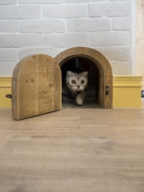 An Eclectic Loft Designed for Cats (and their humans) & 14 best Cats door images on Pinterest | Pets Pet door and Cat stuff