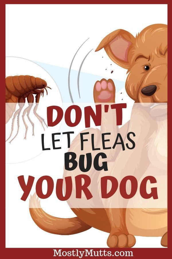 How To Get Rid Of Fleas Naturally Mostly Mutts Natural Dog Care Canine Care Fleas