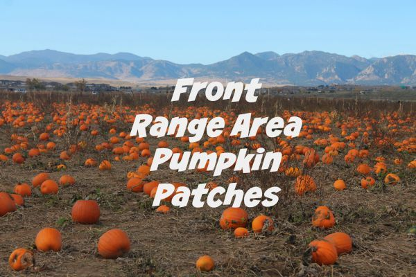 To the Pumpkin Patch We Go: Denver area Pumpkin Patches